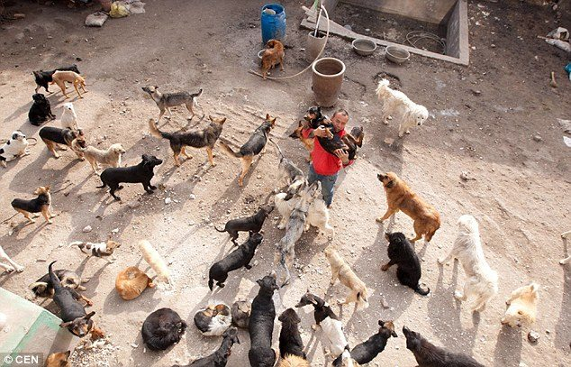 chinese_millionaire_loses_dog_and_rescues_2000_more_3