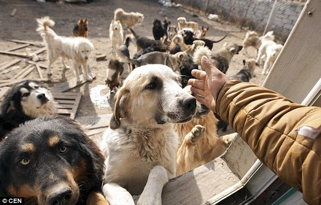 chinese_millionaire_loses_dog_and_rescues_2000_more_4