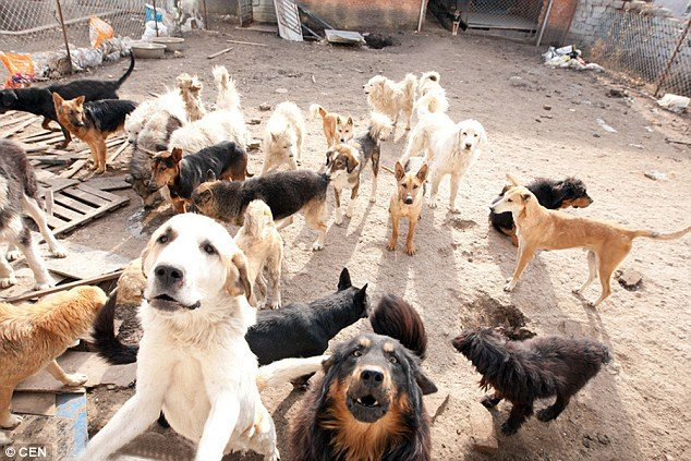 chinese_millionaire_loses_dog_and_rescues_2000_more_5