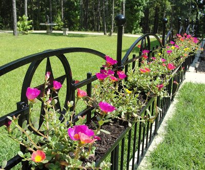 Wrought-iron-fence-baskets-Texas-Eagle