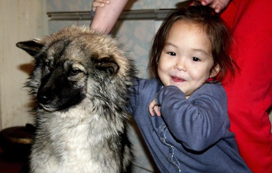 Dog Saves 4-Year-Old Girl Who Got Lost in the Woods for 11 Days - 4
