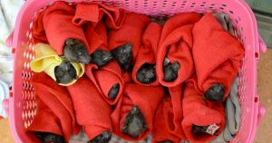 28_baby_bats_rescued_featured