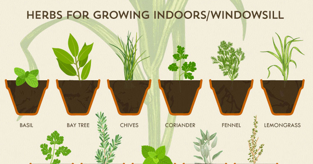 This herb garden cheat sheet makes growing herbs easier - Best herbs to grow indoors ...