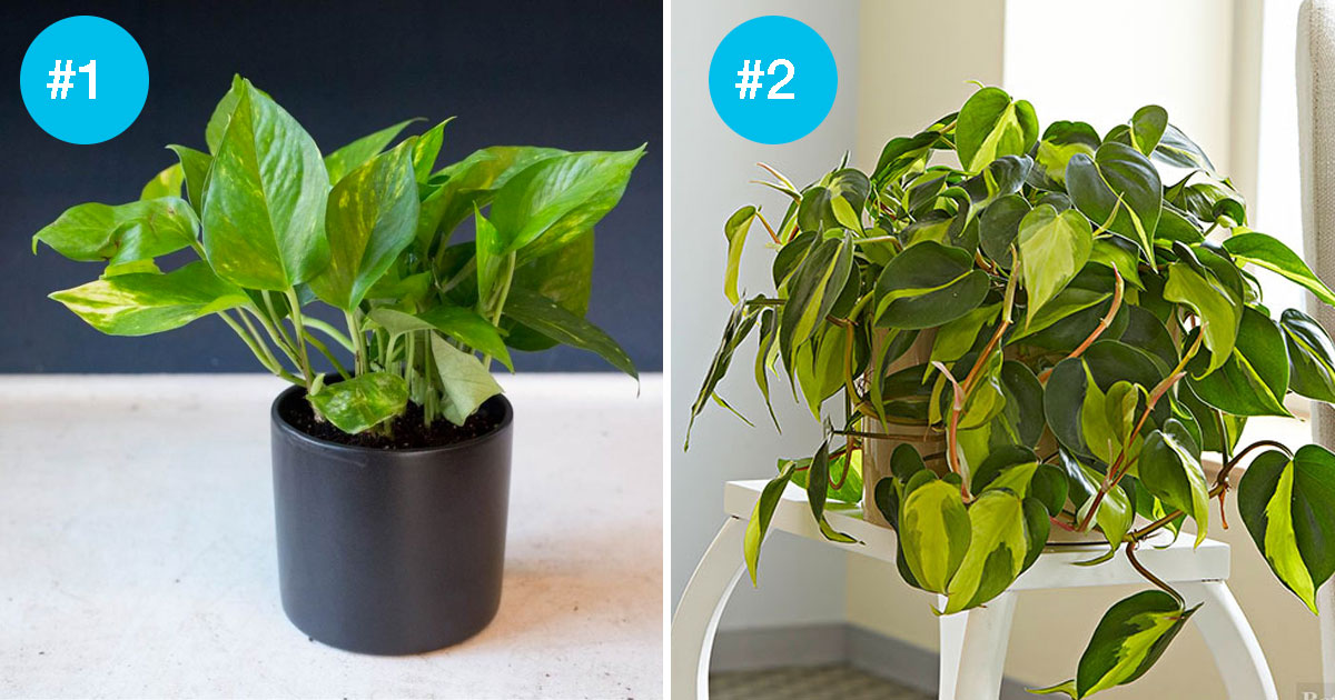 Don T Get Much Sunlight In Your Home These 9 Houseplants