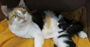 cat_and_kitten_find_shelter_featured