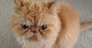 grumpy_cat_finds_new_home_featured