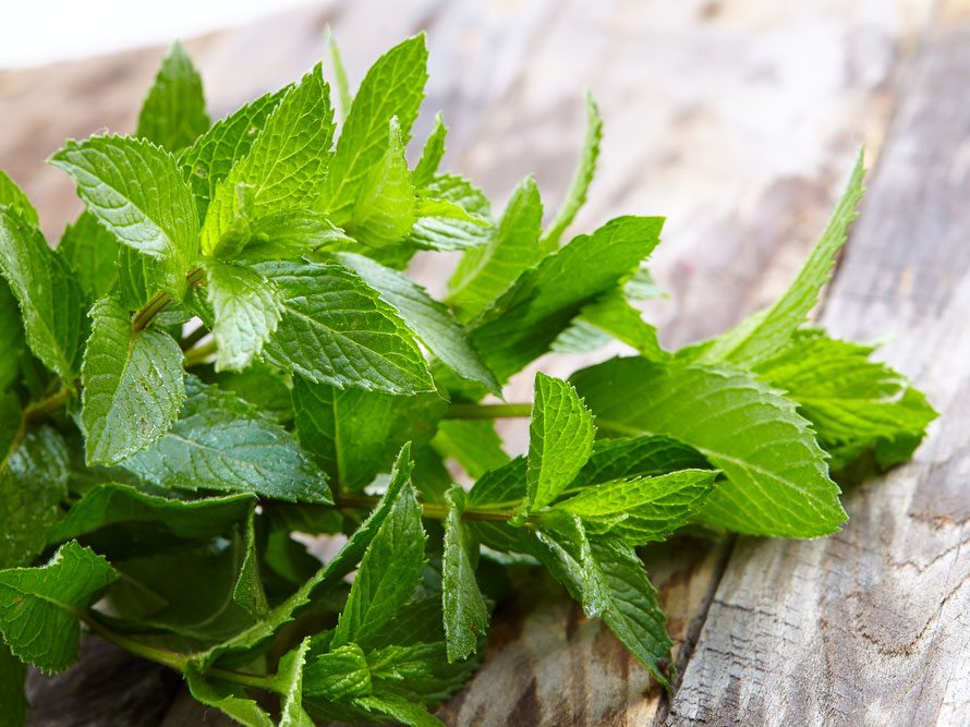 peppermint-health-benefits_0