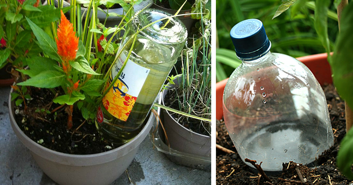 5 Nifty Ways To Water Your Plants And Garden While You Are Away
