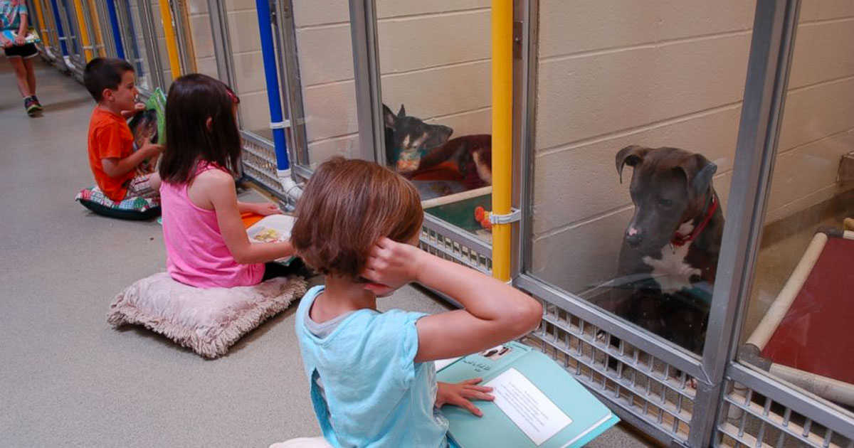 children_read_to_shelter_dogs_featured