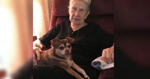 rescue_dog_saves_92_year_old_owner_featured