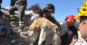 retriever_rescued_from_earthquake_rubble_featured