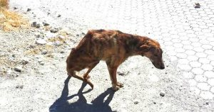 woman_rescues_dog_with_broken_spine_featured
