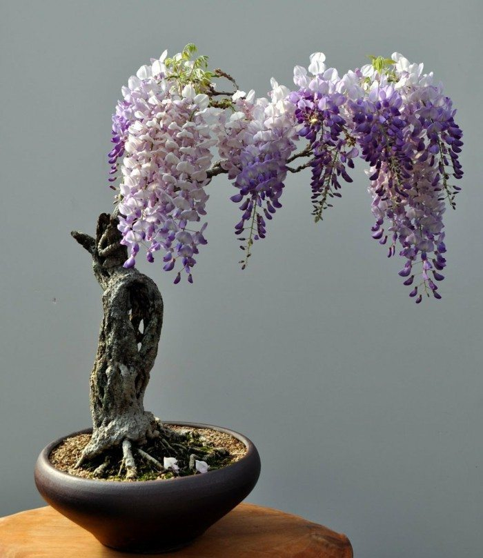bonsai tree beautiful flowers plants bonsai tree