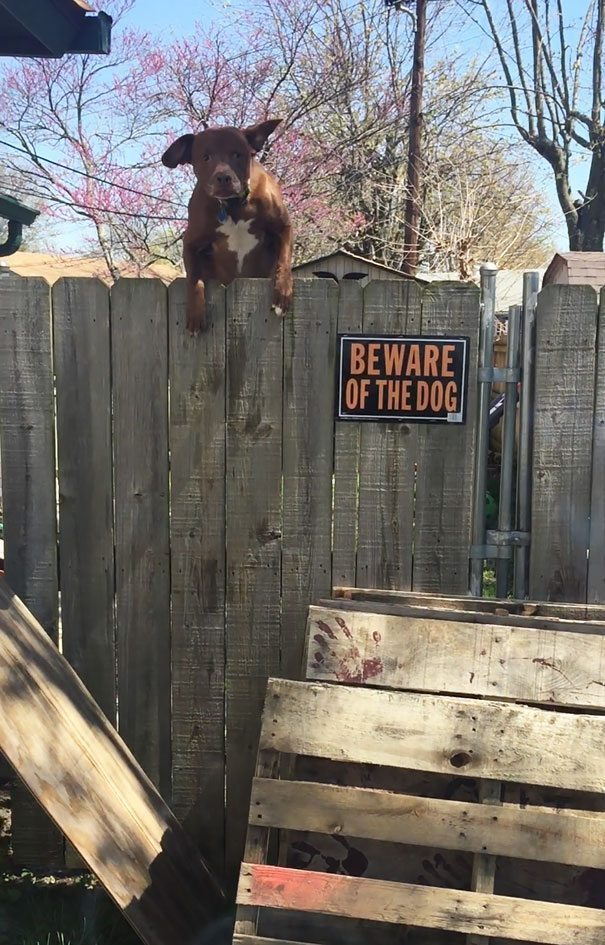 beware-of-the-dog-1-57ee556b7835d__605