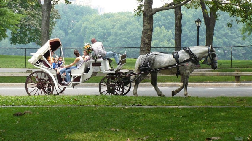 horse_carriage_in_central_park_new_york_city_-_panoramio-850x478