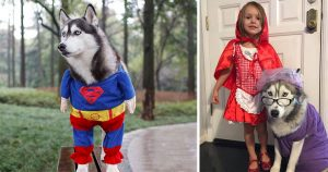 halloween_costumes_for_dogs_featured