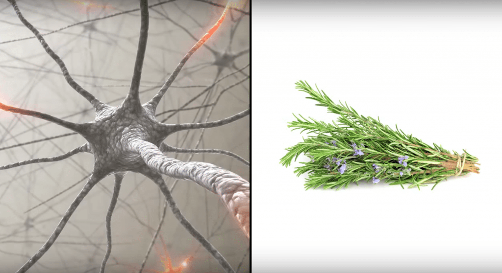 According to scientists, sniffing rosemary will improve your memory. Here's how Screen-Shot-2016-11-10-at-10.51.11-PM-1024x558